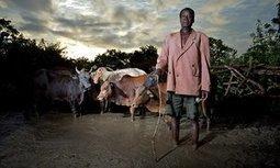 Ethiopia's farmers fight devastating drought with land restoration | GarryRogers Biosphere News | Scoop.it