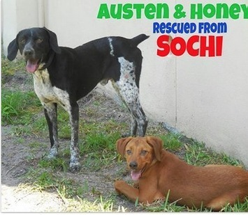 Two Of the Stray Dogs From Sochi Have Found a New Life In Florida - TIME | Dog Rescue | Scoop.it