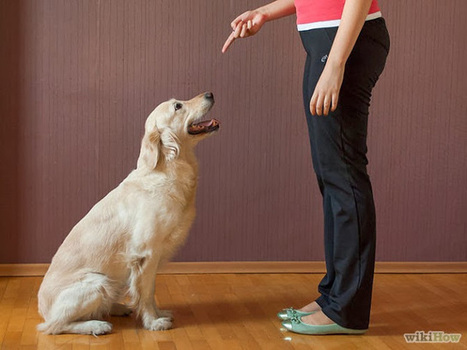 """DOG TRAINING BY PROFESSIONAL DOG TRAINER:- WESLEY LAIRD: Introducing """"Sit"""" command 