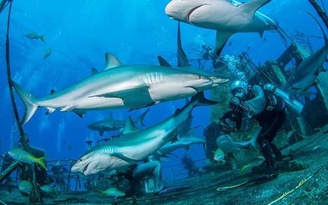 Great scuba dives of the world - Telegraph | Nitroxxed Scuba News | Scoop.it