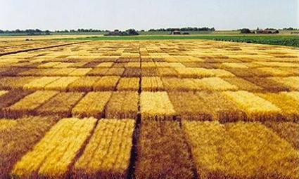 El 75% de los 'cereales' tienen micotoxinas - Intereconomía | Ingeniería en Molineria | Scoop.it