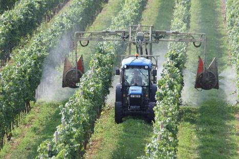 Les apiculteurs mettent en garde contre ta toxicité d'un nouvel insecticide sur les abeilles   Abeilles, intoxications et informations   Scoop.it