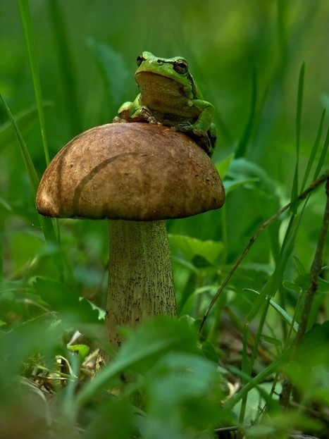 Micro mondi e macro foto: funghi, rospi, insetti e lumache visti da molto vicino   Eco Connection Media   Scoop.it