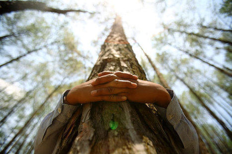 Science Proves Hugging Trees Is Good for Health | Democratic Holistic Education | Scoop.it