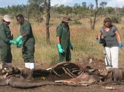 SA not ready to lift rhino horn trade ban - IOL.co.za | What's Happening to Africa's Rhino? | Scoop.it
