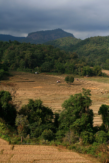 Paddy fields, Doi Inthanon National Park | Agricultural Biodiversity | Scoop.it