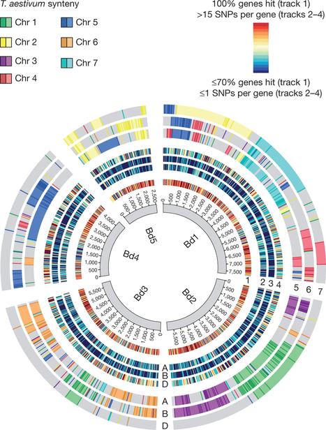 Analysis of the bread wheat genome using whole-genome shotgun sequencing | CBiB - Bordeaux Bioinformatics Center | Scoop.it