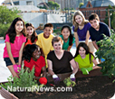 Edible schoolyards and healthy cooking lessons - Growing fresh solutions for childhood obesity | SUSTAINABILITY | Scoop.it
