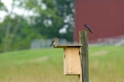 Painting Your Birdhouse: Ideas That You Can Use | MySpy Birdhouse | Scoop.it