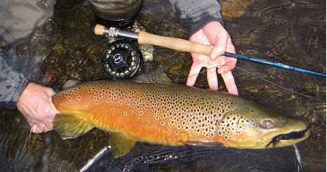 Fly Fishing Videos - Fly Casting Videos - Fly Tying Videos - Fly Fishing Rivers Videos | Learn How to Fly Fish DVD | Cascade Media Works | Scoop.it