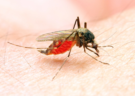 Zika pourrait affecter la santé des yeux des bébés | Santé et Soins | Scoop.it