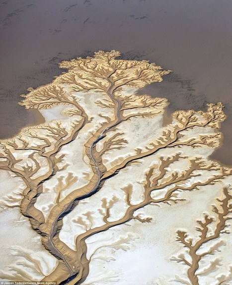 Stunning aerial photos of Colorado River that make it look like TREES | Baja California | Scoop.it