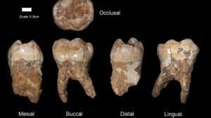 Ils ont découvert des restes d'un vieil humain de 400.000 ans! | L'Humanosphère | Aux origines | Scoop.it