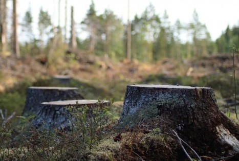 Deforestation and Food Demand - RedOrbit | Vertical Farm - Food Factory | Scoop.it