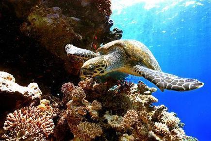Protéger l'océan, activité rentable qui peut rapporter 900 milliards de dollars | The Blog's Revue by OlivierSC | Scoop.it