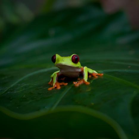 Costa Rica Immagini dalla Netura | Foto dal Mondo | Scoop.it