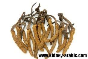 علاج الأمراض الكلية - هل كورديسيبس مفيد علي مرضي الكلي   أمراض الكلية في السعودية   Scoop.it