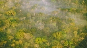 Carbon sequestration: Managing forests in uncertain times - Nature.com   Energy supply - biofuels - soil science   Scoop.it