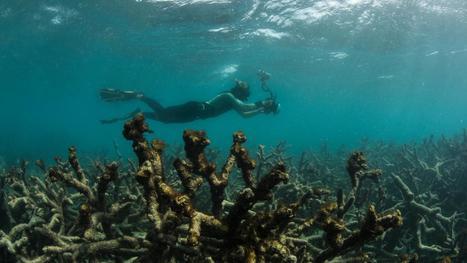 EN IMAGES. La Grande barrière de corail malade de ses coraux | Ocean's news | Scoop.it
