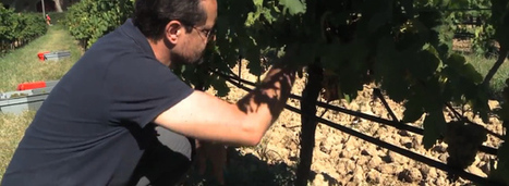 Des stations d'épuration pour irriguer les vignes | Le Vin et + encore | Scoop.it