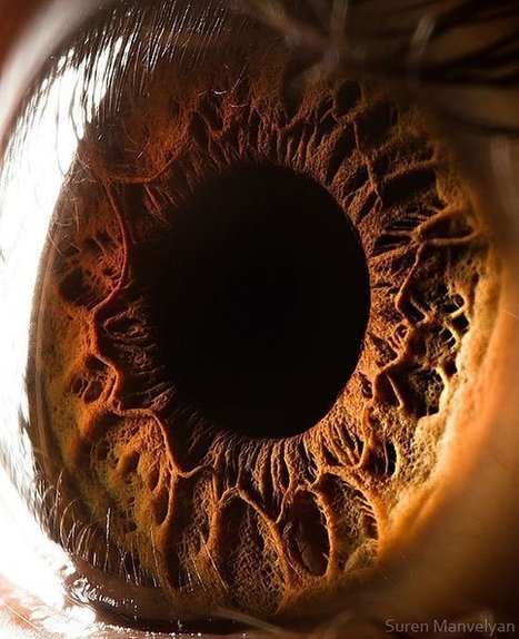 21 Extreme Close-Ups of the Human Eye | PLASTICITIES  « Between matter and form, between experience and consciousness, the active plasticity of the world » | Scoop.it