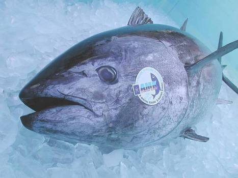 JAPAN: Kinki University fish lab opening Ginza eatery | Japan | Scoop.it