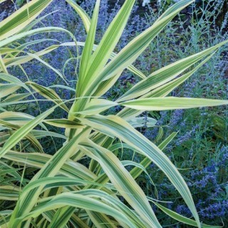 Ornamental Grasses - Spring Hill Nursery | create a garden landscape | Scoop.it