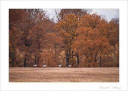 Preset Lightroom : Couleurs d'automne • Revue Photo | RevuePhoto | Scoop.it