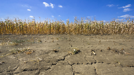 #California's not the only state in the middle of a scary #drought right now | Messenger for mother Earth | Scoop.it