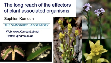 """Video: Sophien Kamoun """"The long reach of the effectors of plant associated organisms"""",  77th CSHL Symposium on Quantitative Biology: The Biology of Plants, June 1, 2012. 