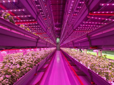 The future of agriculture is an indoor vertical farm half the size of a Wal-Mart | Vertical Farm - Food Factory | Scoop.it