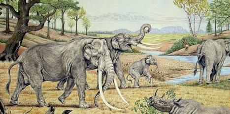 L'étude de fossiles de coléoptères révèle l'aspect du paysage lors de la dernière période interglaciaire | EntomoNews | Scoop.it