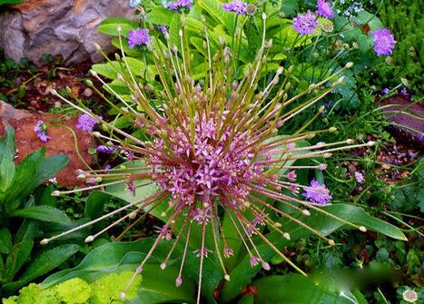 p o t a g e r: Cut Flower Caddie | Annie Haven | Haven Brand | Scoop.it