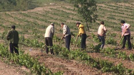 La Chine instaure enfin des marques déposées pour les propriétés vignobles - Marketing en Chine | Oenotourisme | Scoop.it