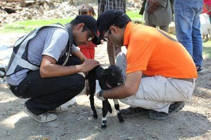 World Animal Protection - Animals in Disasters Blog | Compassion in Action | Scoop.it