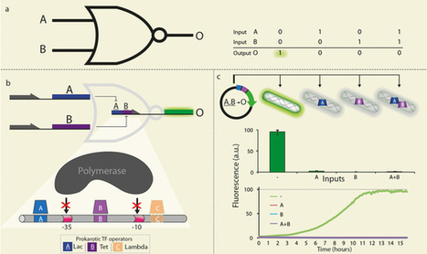 A programmable NOR-based device for transcription profile analysis : Scientific Reports : Nature Publishing Group | SynBioFromLeukipposInstitute | Scoop.it