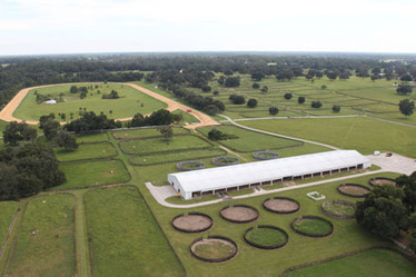 Considering Ocala? Consider Joan Pletcher Realtor - Ocala and Marion County Florida Land, Estates & Horse Farms - Lucky Warrior Farm & Estate | Ocala Florida Luxury Real Estate and Farms - Joan Pletcher | Scoop.it