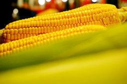 Les États membres boudent les OGM autorisés par Bruxelles | Questions de développement ... | Scoop.it