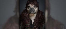 Funny Portraits of Dogs Dressed Like Humans | Viral YouTube Videos, Photos, Humorous Quotes & Funny News | Scoop.it