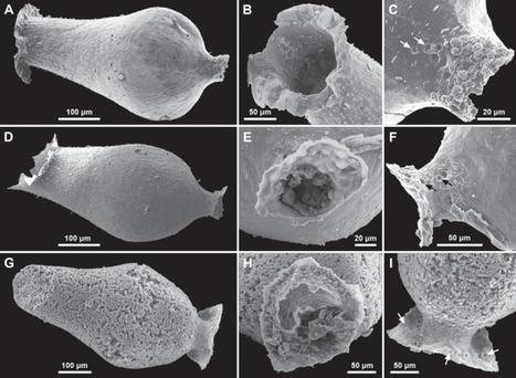 Des chitinozoaires au Cambrien   Aux origines   Scoop.it
