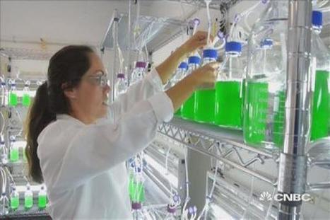 Could algae save the planet? | Algae | Scoop.it