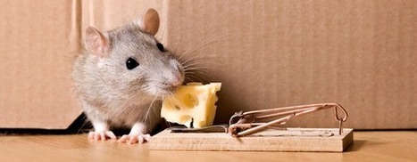Why a Rat is Still Smarter than Google? | The Robot Times | Scoop.it