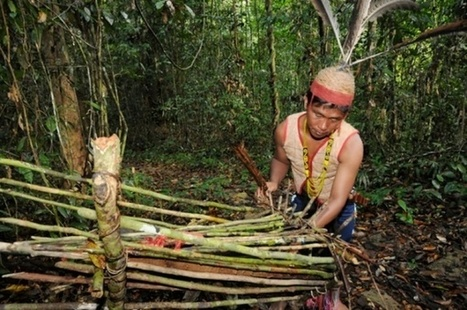 Indigenous peoples vow to map customary forests   Nature and Culture   Scoop.it