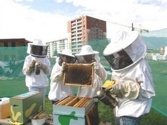 Les ruches en ville : une fausse bonne idée !   Economie de la Biodiversité   Scoop.it