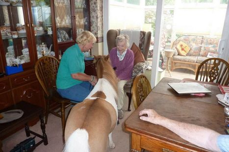 Animal Hero Awards 2013: Mr P the pony visits the elderly in care homes and sick kids in hospital | IbEnglit | Scoop.it