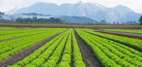 Journée Nationale Salade le 8 octobre   HORTICULTURE BOTANIQUE   Scoop.it