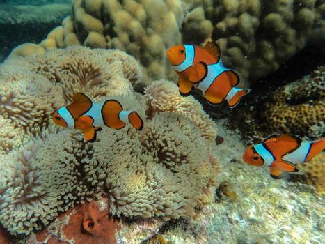 Paradise Found: Coron Island Hopping | Philippine Travel | Scoop.it