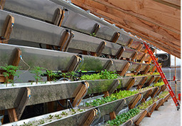 New York City's Edenworks Advances Urban Aquaponics with Custom Ecosystems | Vertical Farm - Food Factory | Scoop.it