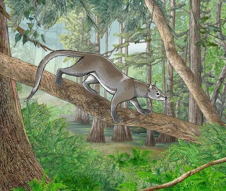 Ancient Arboreal Mammal Discovered at Root of Carnivore Family Tree | Ancient Origins of Science | Scoop.it