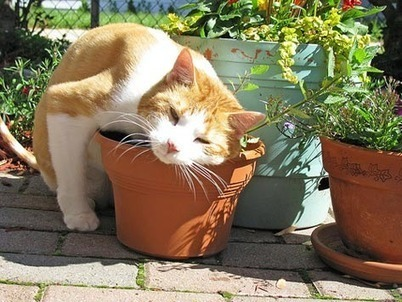 Ten Herbs to Improve Your Cat's Health | petMD | 100 Acre Wood | Scoop.it